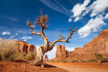 elongation: tree monument valley - usa