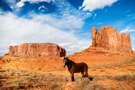 horse in Monument Valley - united states