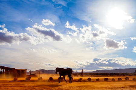 horse in the monument valley - usa - arizona Stock Photo