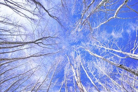 Forest composed of deciduous and snowy trees in a light blue sky Stock Photo