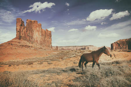 brown horse is running at the monument valley on a sunny day, in the background mountains of rocks and a blue sky - USA - Arizona