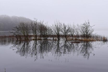 Trees in the water on Lough Key in county Roscommon in Ireland foggy and flooded during winter with the swimming area submerged under water