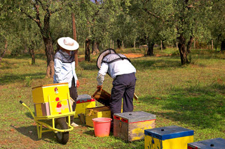 bee boxes and  bee keepers on work ... look the motion.. photo