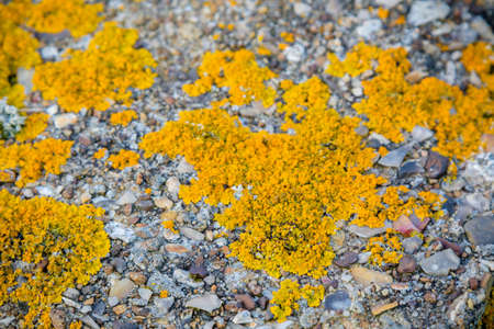 Lichen growing on coastal defences on the Isle of Grain, Kent United Kingdom to defend against a Nazi invasion of Britain Reklamní fotografie
