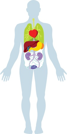 Menselijke inwendige biologische organen.