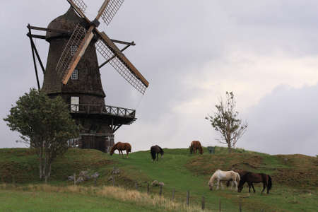 Windmill and horses