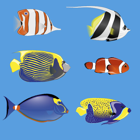 tropical fish: set of six tropical fish with different colors