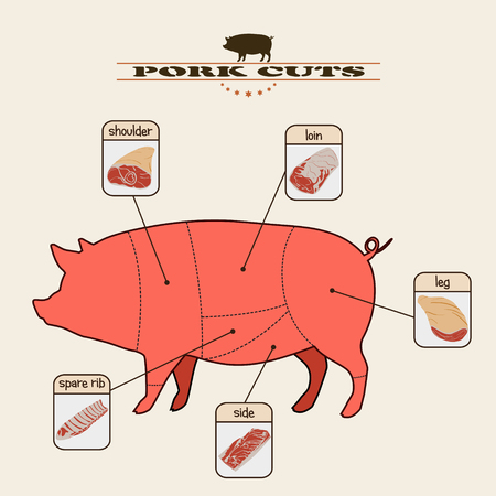 info graphic of the pork cuts on light background Vector