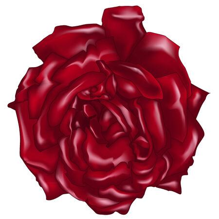 白地に赤いバラをベクトル  イラスト・ベクター素材