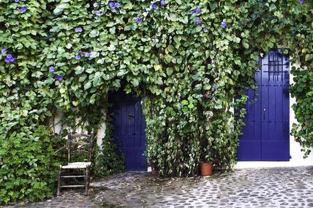 アイビー、青いドアの外の椅子と家 写真素材