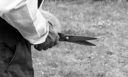 scissors detail of a sheep shearer in black and white