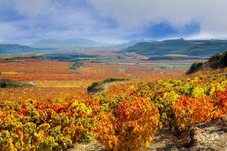 スペインのラ ジャの秋のブドウ畑