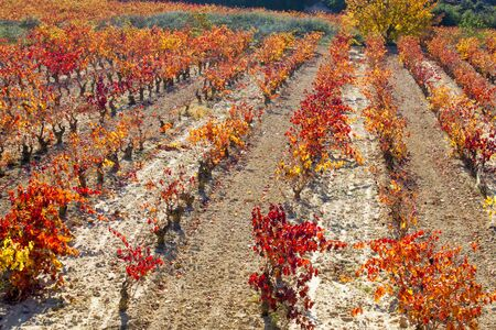 rioja: vineyards in autumn in La Rioja in Spain Stock Photo