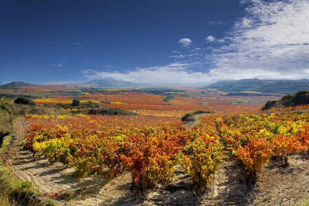 스페인의 라 리오하에있는 가을의 포도원