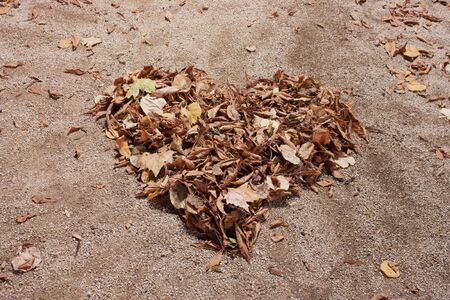 An autumn heart made of tree leaves