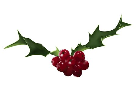 holly berries and leaves on isolated background