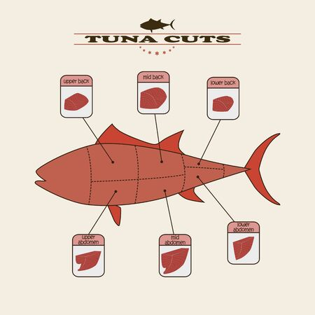 bluefin tuna: info graphic of the tuna cuts on light background