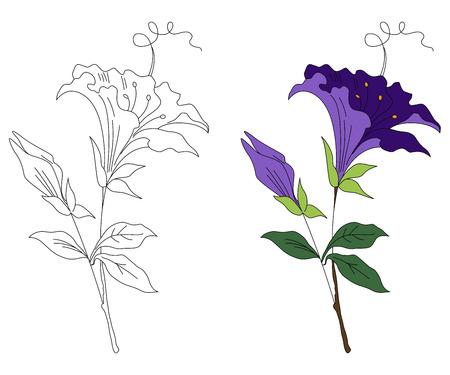 黒と白とカラーの花の飾り 写真素材 - 60370844