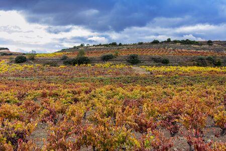 スペインのラ ・ リオハ州の秋のブドウ畑 写真素材 - 67081659
