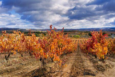 スペインのラ ・ リオハ州の秋のブドウ畑 写真素材 - 66950257