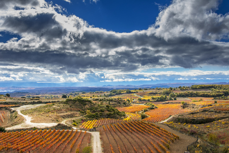 vineyards in autumn in La Rioja in Spain Stock Photo