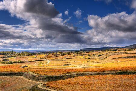 vineyards in autumn in La Rioja in Spain Stock fotó