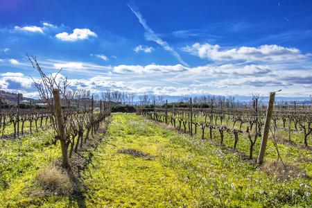 스페인의 라 리오하 (La Rioja) 포도원
