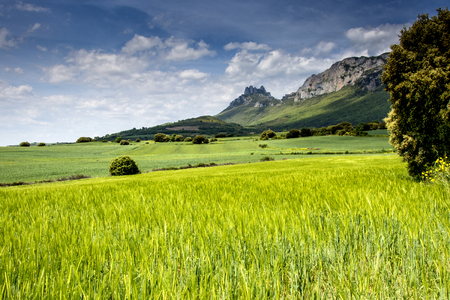 landscape in spring in Alava in Spain