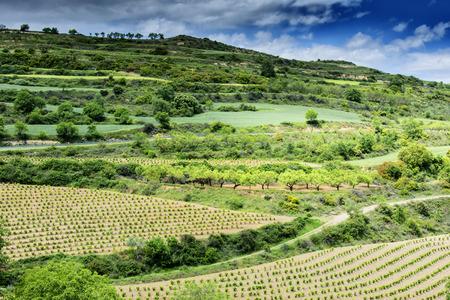 landscape in spring in Alava in Spain 写真素材 - 96141825