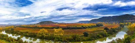 vineyards in autumn in La Rioja in Spain 免版税图像