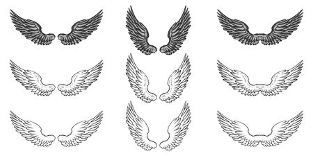 Set of black and white wings on white  イラスト・ベクター素材
