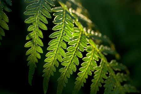 A green tree fern branch captures the first light of morning