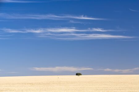 A single group of trees sits isolated on a dry grass hill