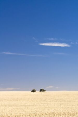 A pair of trees sit together on a dry grass hill