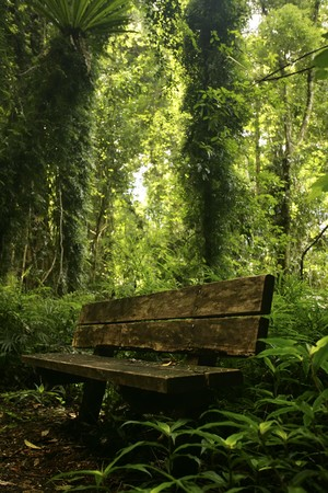 An old rustic bench seat in an over grown forest Stock Photo