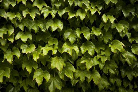 An abstract of plant leaves covering a wall