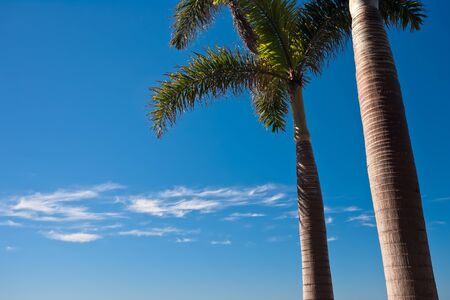 Palms trees and blue sky at the beach