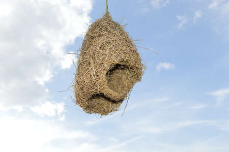 Bird s nest hanging in front of blue sky photo