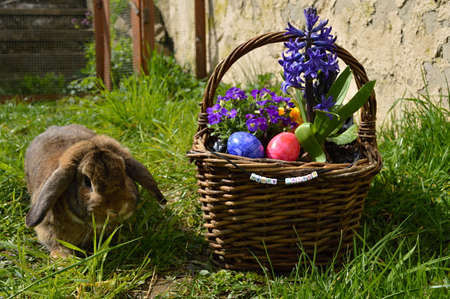 A cute rabbit is looking at a basket with easter eggs photo