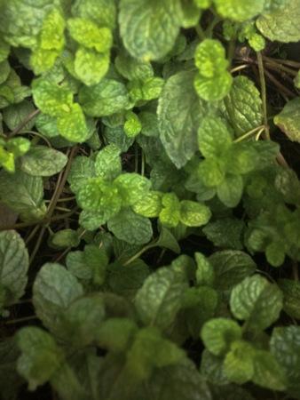 leaves background. Stok Fotoğraf
