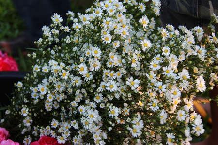 Little white flower photo