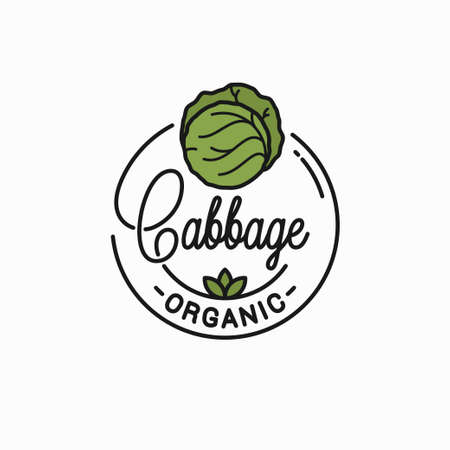 Round linear green cabbage Illustration
