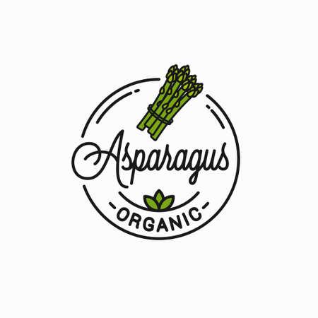 Asparagus vegetable . Round linear bunch white Illustration