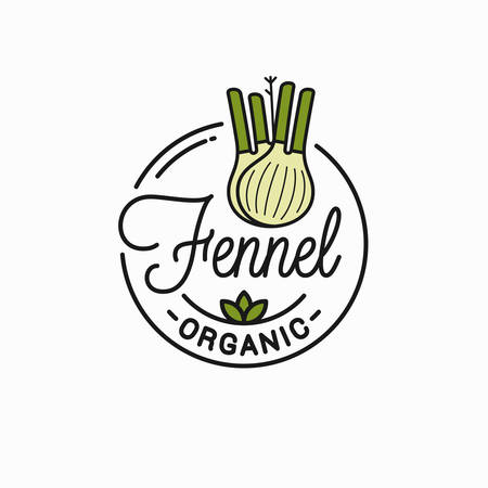 Fennel bulb    Round linear of fennel vegetable Illustration