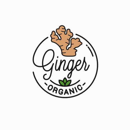 Ginger root  . Round linear of ginger Illustration