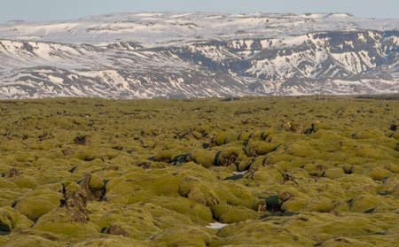 trave: Beautiful moss field in Iceland