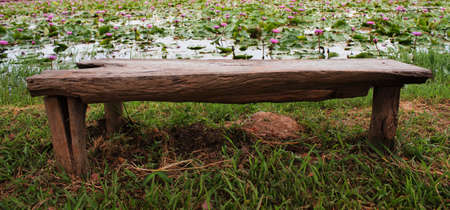 Bench in the garden lotus photo