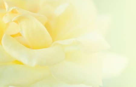 Yellow Rose zachte wazige achtergrond.