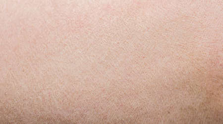pig skin: Typical pink pig skin. Stock Photo