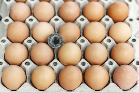 eggtray: Eggs in the egg-tray with chicken  little feathers. Stock Photo